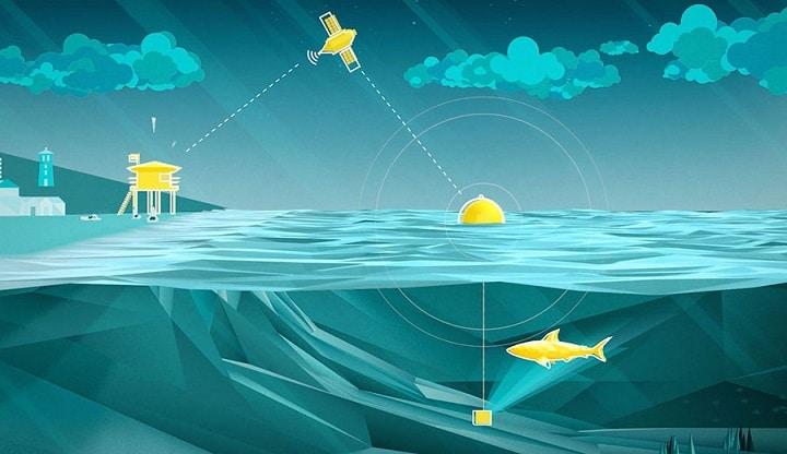 La boa intelligente che segnala gli squali in avvicinamento