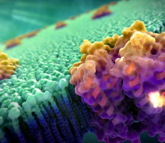 Rappresentazione artistica di una proteina