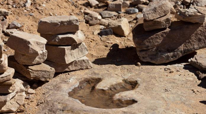 Impronta di dinosauro