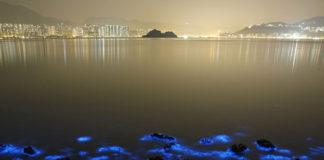 Noctiluca scintillans ad Hong Kong