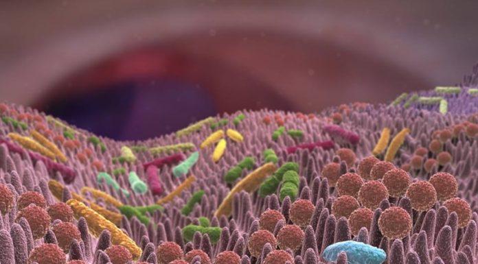 Il microbiota e l'ansia, una correlazione chimica