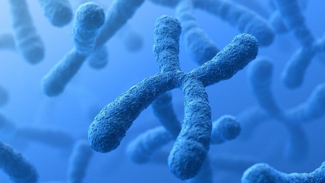 L'inattivazione del cromosoma X alla base del mosaicismo delle donne