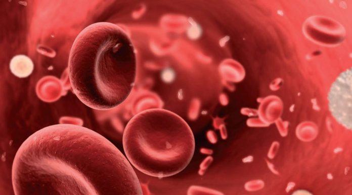 Scoperto l'enzima responsabile del differenziamento dei globuli rossi
