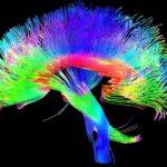 Quali molecole vengono alterate dalle sostanze psicotrope?