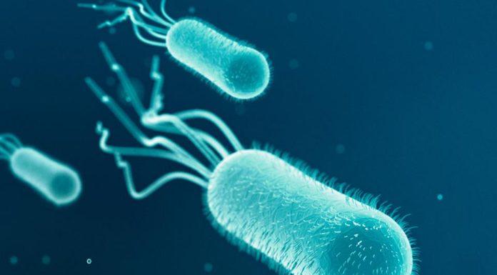 Un batterio per registrare i sistemi biologici