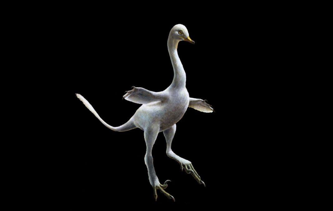 Halszkaraptor