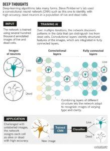 Deep learning in biologia